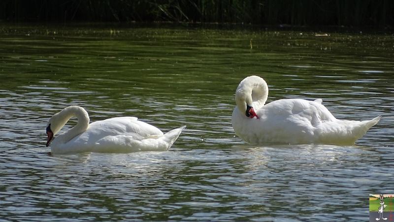 [VD-CH] : 2019-08-16 : Balade sur les bords du Lac de Joux 2019-08-16_Joux_14