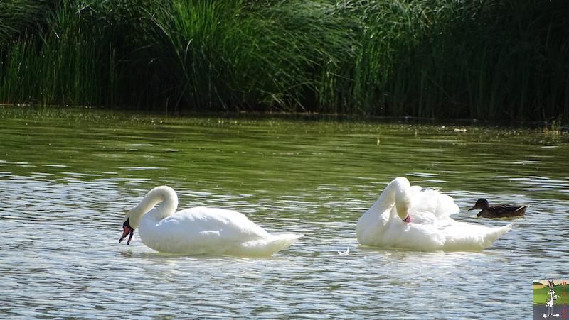 [VD-CH] : 2019-08-16 : Balade sur les bords du Lac de Joux 2019-08-16_Joux_15