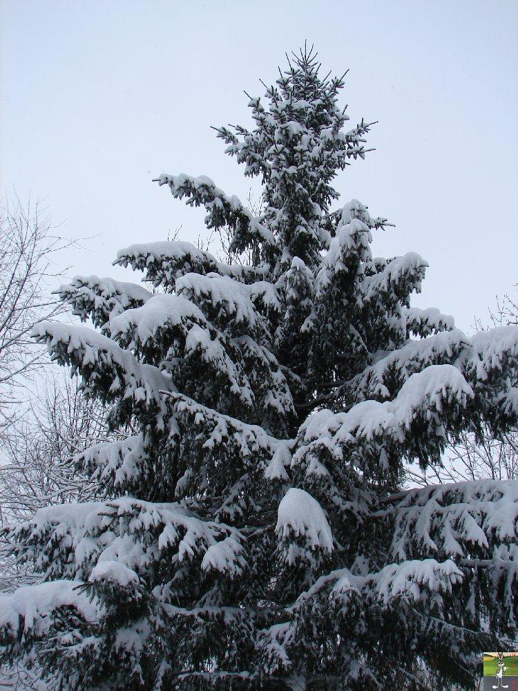 2010-01-30 : Neige 2010-01-30_neige_02