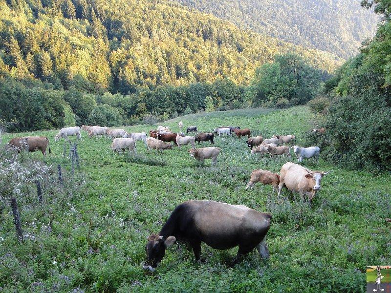 2010-09-22 : nouvelles pensionnaires 2010-09-22_vaches_03