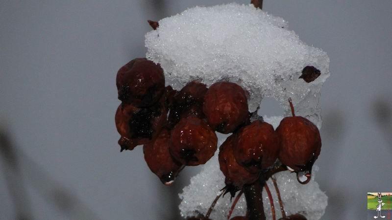 """Les 4 Saisons de """"Mon Jura"""" 2011-02-20_neige_04"""