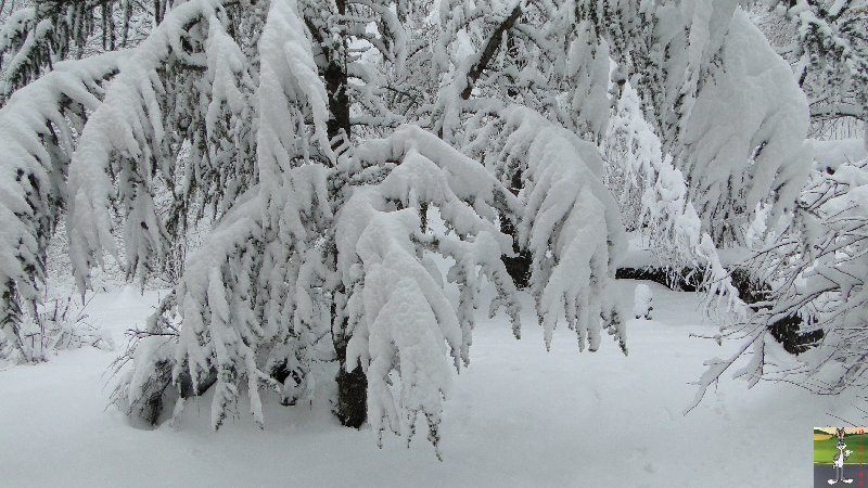 """Les 4 Saisons de """"Mon Jura"""" 2011-12-30_neige_01"""