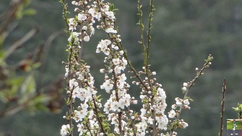 """Les 4 Saisons de """"Mon Jura"""" - Page 2 2012-04-08_neige_fleurs_08"""