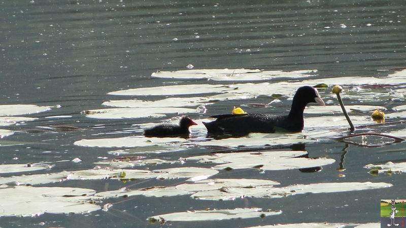 Le lac de Lamoura (39) 2012-06-24_lac_de_lamoura_03