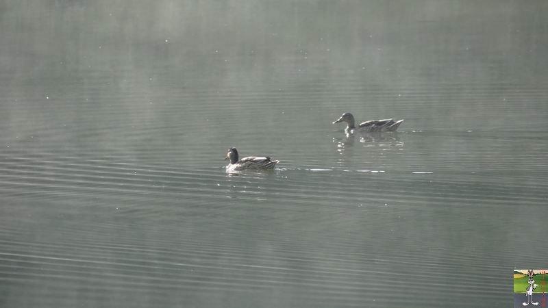 Le lac de Lamoura (39) 2012-08-22_lac_lamoura_07