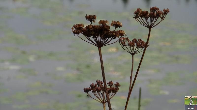 Le lac de Lamoura (39) 2012-08-22_lac_lamoura_16