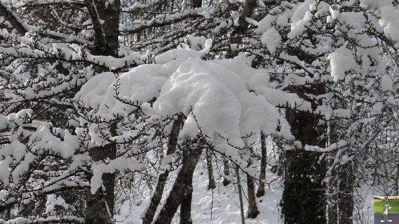 """Les 4 Saisons de """"Mon Jura"""" - Page 2 2012-11-30_neige_02"""