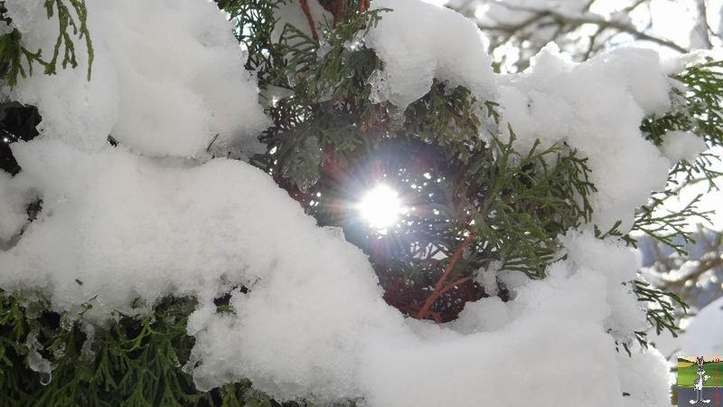 2013-11-24 : Neige et soleil à La Mainmorte (39) 2013-11-24_neige_05