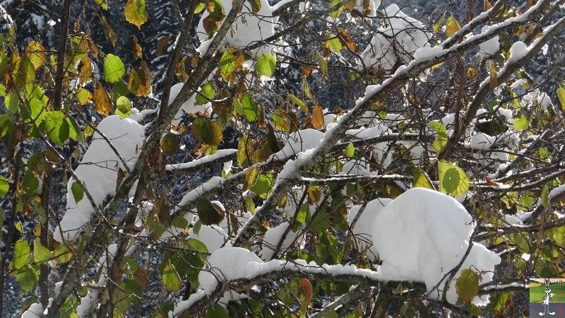 2013-11-24 : Neige et soleil à La Mainmorte (39) 2013-11-24_neige_09