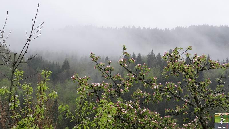 2014-05-01 : Les pommiers sont en fleurs à La Mainmorte (39) 2014-05-01_fleurs_05