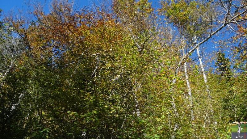 """Les 4 Saisons de """"Mon Jura"""" - Page 5 2014-10-19_couleur_automne_06"""