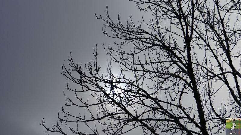 2014-12-26 : Neige du matin à La Mainmorte (39) 2014-12-26_neige_07