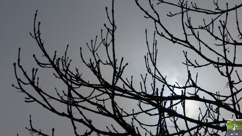 2014-12-26 : Neige du matin à La Mainmorte (39) 2014-12-26_neige_08