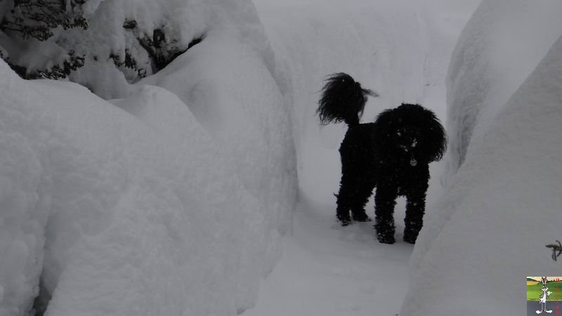 2015-01-31 : Neige à La Mainmorte (39) 2015-01-31_neige_20