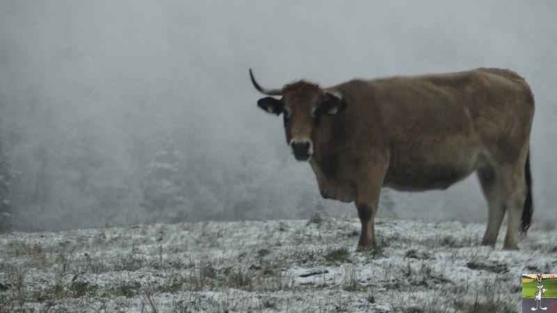 "2015-11-21 : ""Vraie"" première neige à La Mainmorte (39) 2015-11-21_neige_04"