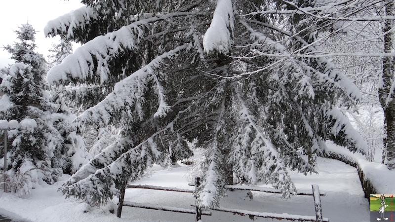 2015-11-22 : Neige à La Mainmorte (39) 2015-11-22_neige_05