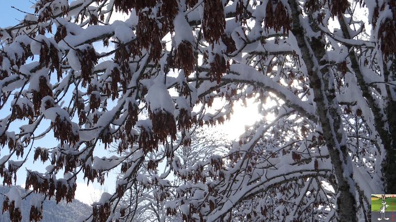 2015-11-22 : Neige à La Mainmorte (39) 2015-11-22_neige_19