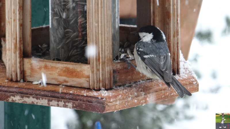 2016-02-14 : Neige à La Mainmorte (39) 2016-02-14_neige_04