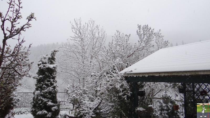 2016-05-01 : Encore et toujours de la neige à La Mainmorte (39) 2016-05-01_neige_02