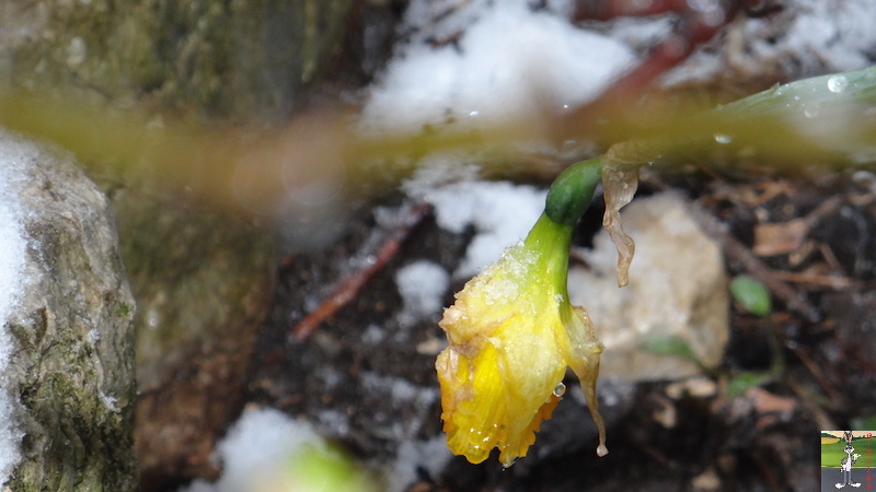2016-05-01 : Encore et toujours de la neige à La Mainmorte (39) 2016-05-01_neige_07
