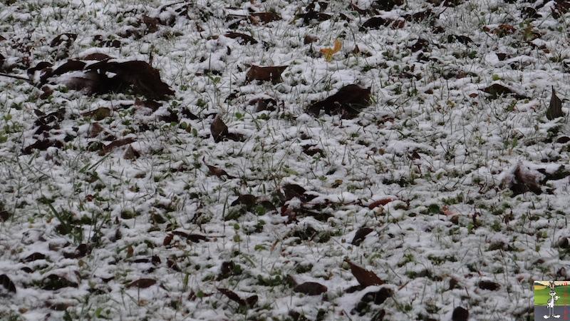 2016-11-06 : Première neige à La Mainmorte (39) 2016-11-06_neige_09