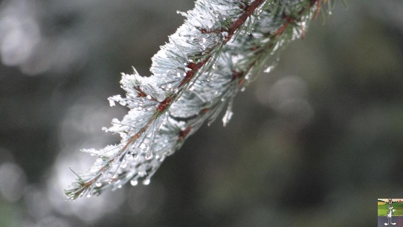 2016-11-06 : Première neige à La Mainmorte (39) 2016-11-06_neige_10