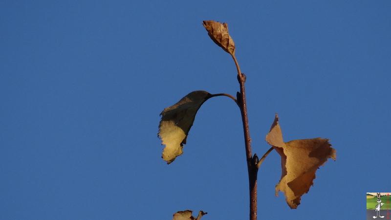 2016-12-04 : Automne, presque l'hiver à La Mainmorte (39) 2016-12-04_automne_06