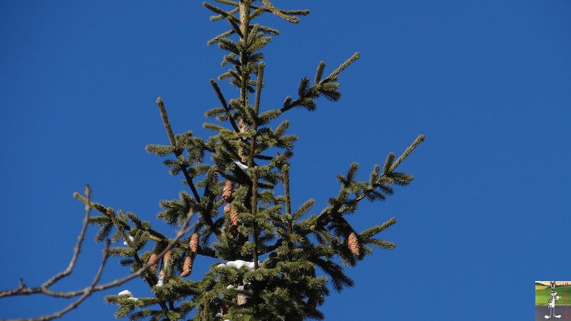 2017-01-06 : Soleil, neige et ciel bleu dans le Haut-Jura (39) 2017-01-06_soleil_neige_05