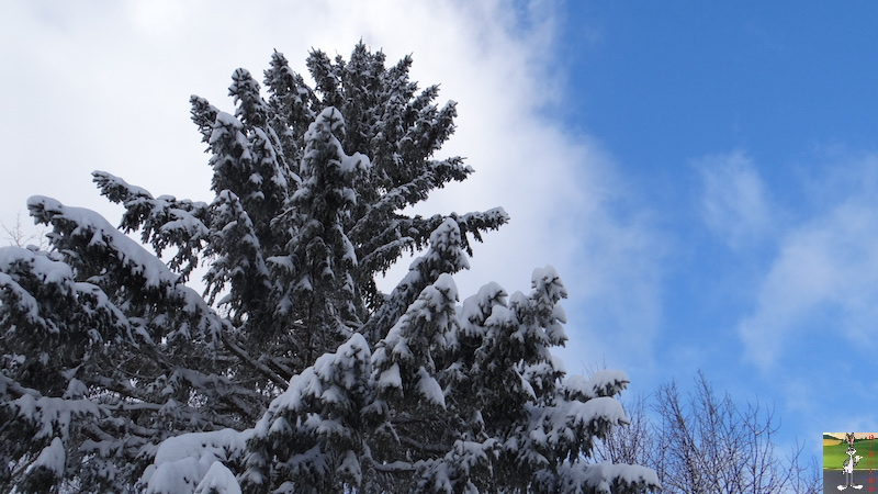 2017-01-14 : Neige à La Mainmorte (39) 2017-01-14_neige_07