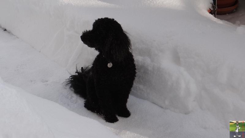 2017-01-14 : Neige à La Mainmorte (39) 2017-01-14_neige_19