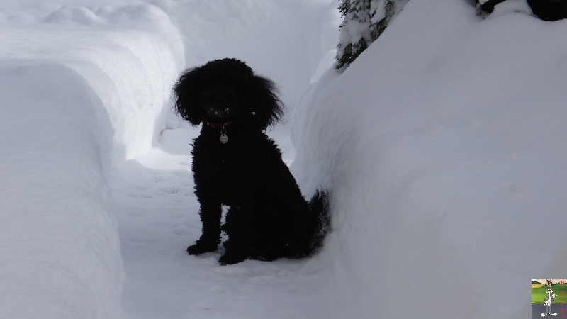 2017-01-15 : Neige à La Mainmorte (39) 2017-01-15_neige_03