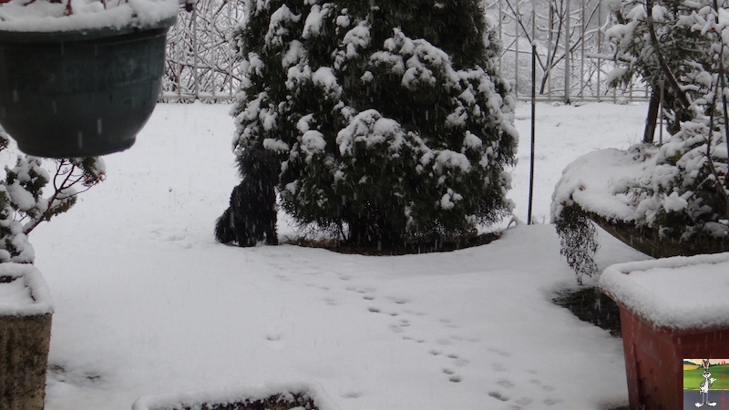 2017-02-05 : Retour de la neige à La Mainmorte (39) 2017-02-05_neige_01