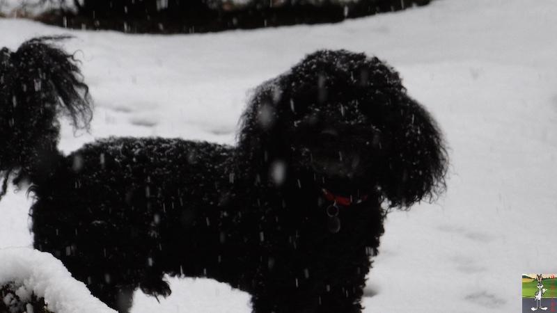 2017-02-05 : Retour de la neige à La Mainmorte (39) 2017-02-05_neige_05