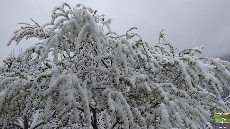 2017-04-28 : Re re re retour de la neige à La mainorte (39) 2017-04-28_neige_07