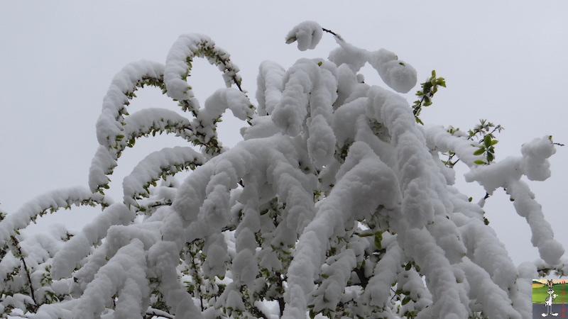 2017-04-28 : Re re re retour de la neige à La mainorte (39) 2017-04-28_neige_09