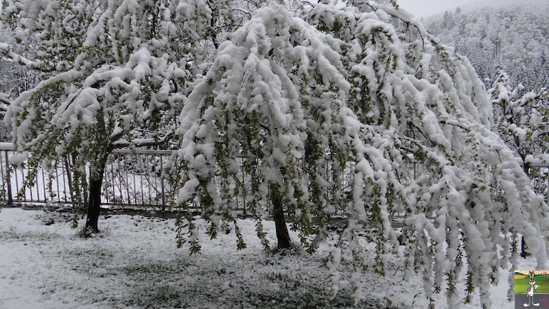 2017-05-01 : A nouveau de la neige à La Mainmorte (39) 2017-05-01_neige_07
