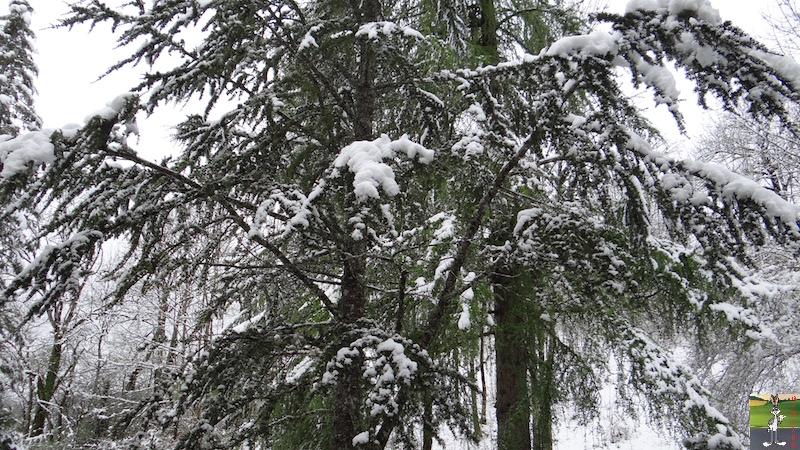 2017-05-01 : A nouveau de la neige à La Mainmorte (39) 2017-05-01_neige_14