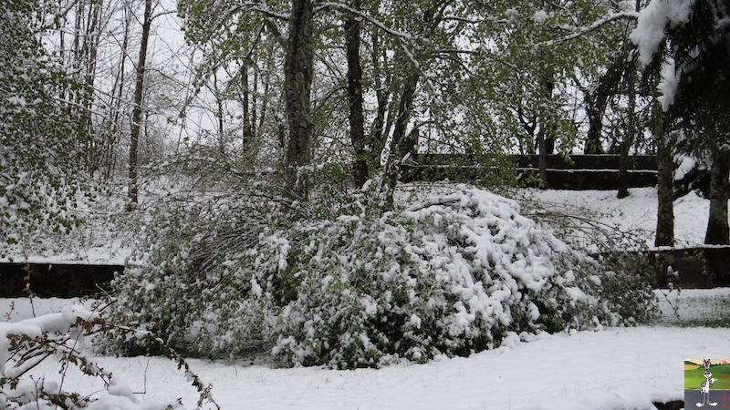 2017-05-01 : A nouveau de la neige à La Mainmorte (39) 2017-05-01_neige_15