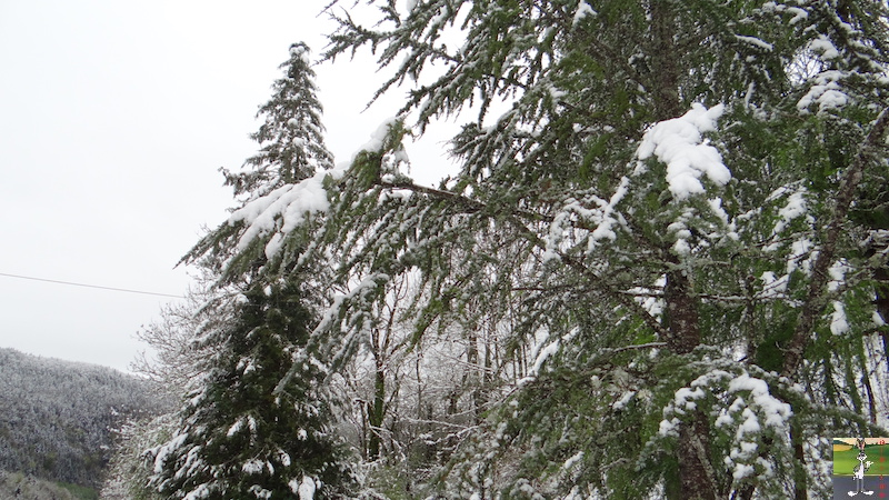 2017-05-01 : A nouveau de la neige à La Mainmorte (39) 2017-05-01_neige_16