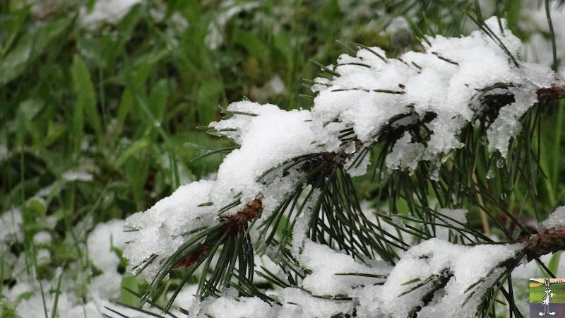 2017-05-01 : A nouveau de la neige à La Mainmorte (39) 2017-05-01_neige_18