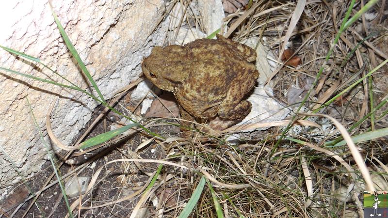 2017-06-24 : Nouvelle créature de la nuit à La Mainmorte (39) 2017-06-24_creature_nuit_02