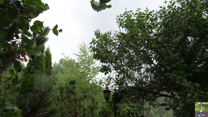 2017-07-22 : Fleurs et pluie à La Mainmorte (39) 2017-07-22_Fleurs_Pluie_16