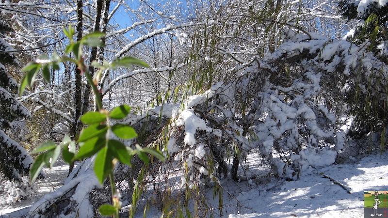 2017-11-14 : Neige et soleil à La Mainmorte (39) 2017-11-14_neige_20