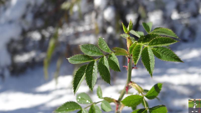 2017-11-14 : Neige et soleil à La Mainmorte (39) 2017-11-14_neige_21