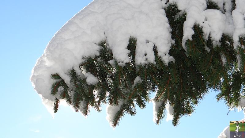 2017-11-14 : Neige et soleil à La Mainmorte (39) 2017-11-14_neige_22