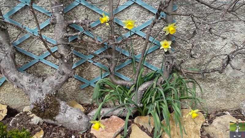 2018-04-15: Retour des fleurs à La Mainmorte (39) 2018-04-15_fleurs_01
