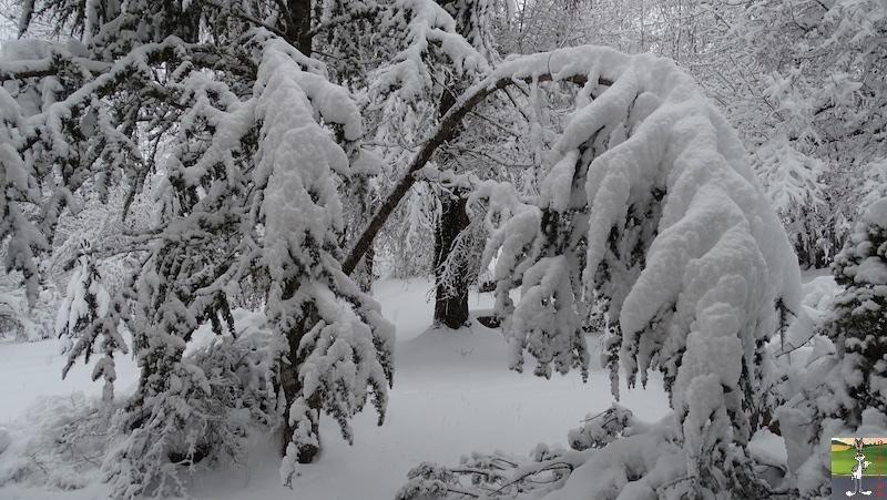 2019-01-13 : La neige tombe abondamment à La Mainmorte (39) 2019-01-13_neige_01