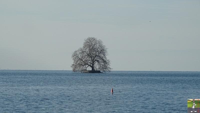 2019-01-19 : Sur les bords du Lac Léman (VD, CH) 2019-01-19_leman_17