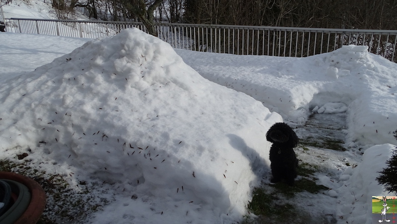 2019-02-02 : La neige est toujours là et bien là à La Mainmorte (39) 2019-02-02_neige_03