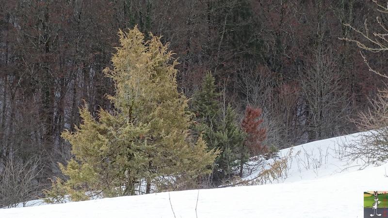 2019-02-02 : La neige est toujours là et bien là à La Mainmorte (39) 2019-02-02_neige_04